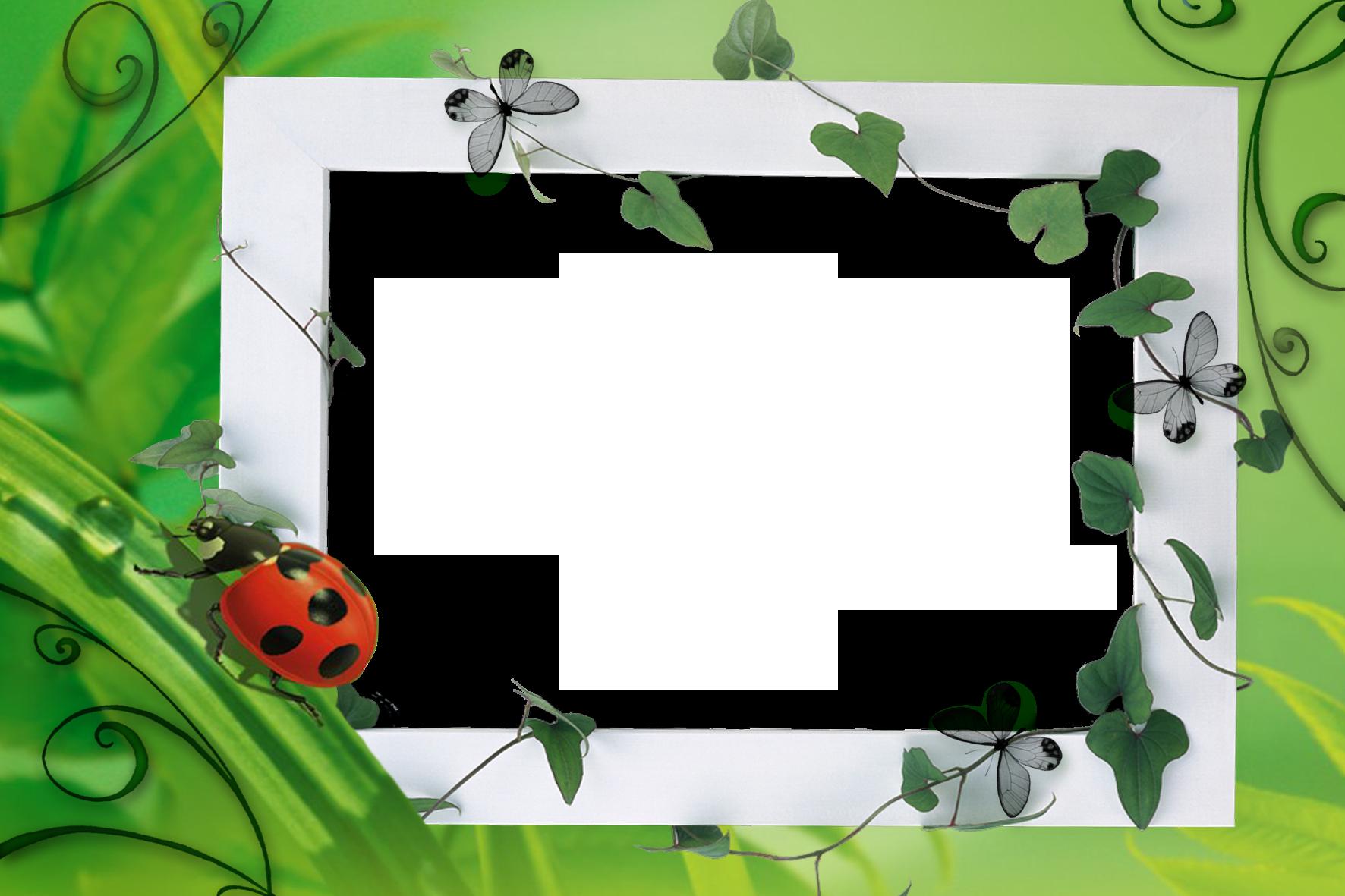 Lilac Images Pixabay Download Free Pictures Cadre de photo gratuit